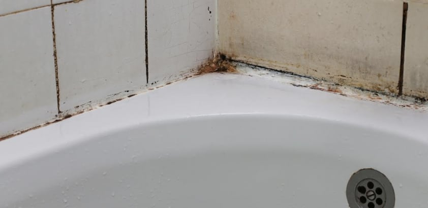 How to Keep Your Bathroom Mold-Free