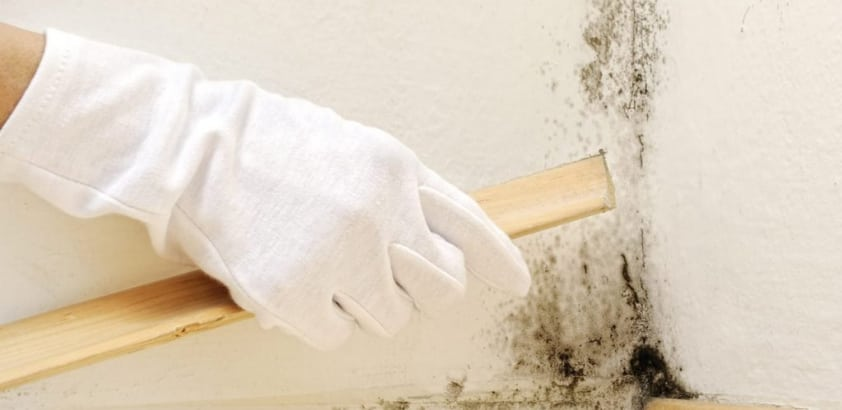 How do you stop mold?