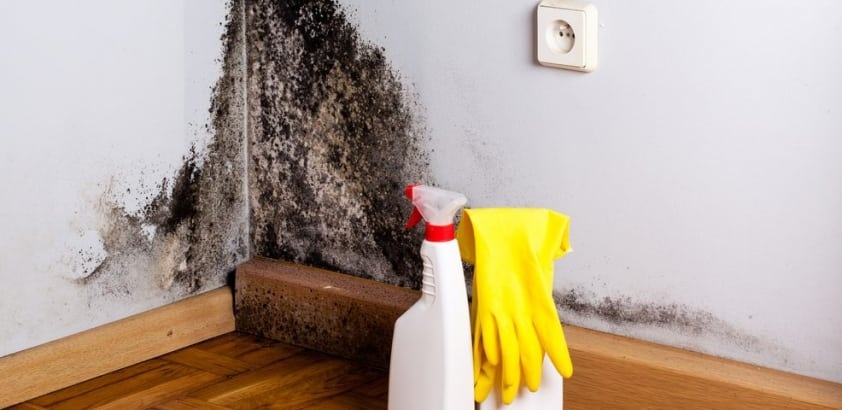 What are the side effects of long term exposure to mold?