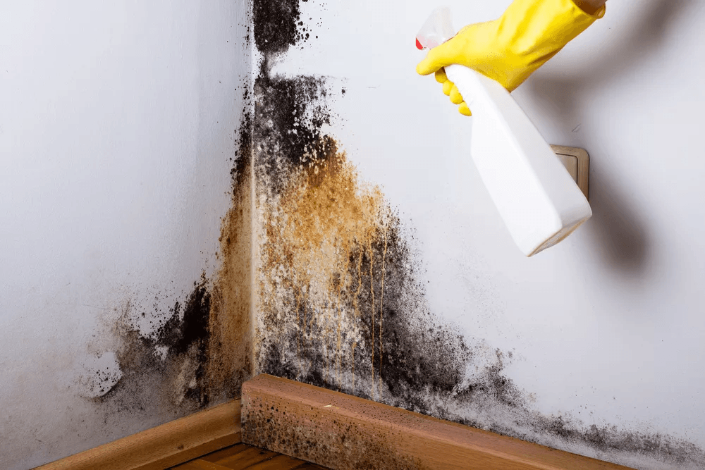 mold-remediation-contractors-chicago