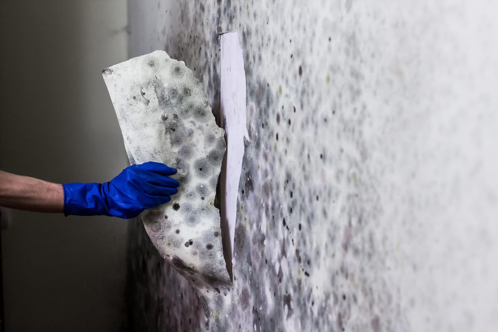 mold-removal-chicago