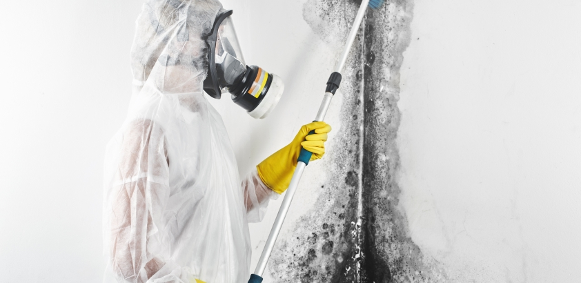 Important Reasons To Have a Professional Mold Removal At Your Home